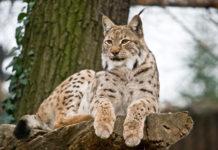 Najniebezpieczniejsze polskie zwierzęta