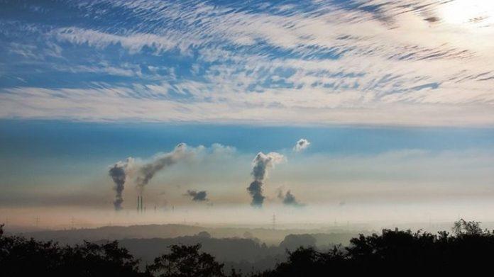 Jak chronić się w domu przed smogiem, czyli oczyszczająca moc roślin