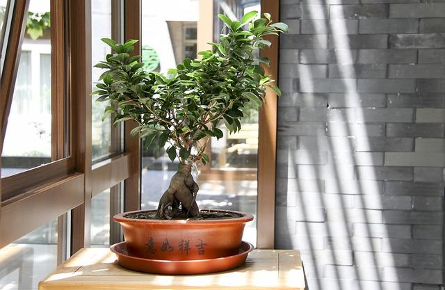 Krajobraz na tacy - drzewka bonsai