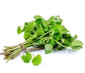 Gotu Kola – pradawne ziele o cudownych właściwościach