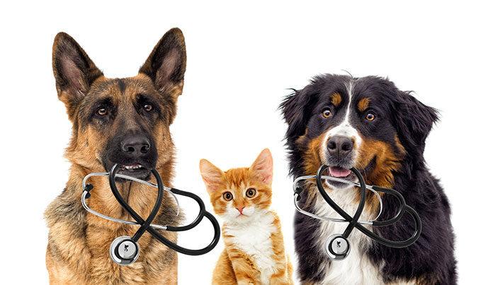Zasady odrobaczania zwierząt