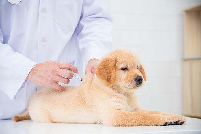 Kastracja czy sterylizacja zwierzaka – co wybrać?